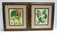 "Prints Of Botanical Fantasy II And Botanical Fantasy IV By Unknown Artist, Both Matted And Framed 22""W x 25""H"