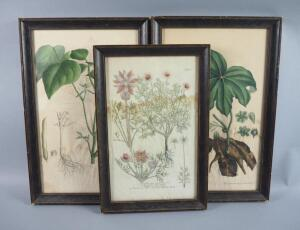 Large Original Hand Colored Botanical Lithographs, Circa 1820s, Framed, Qty 3